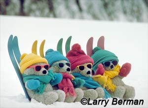 Teddy bears skiing by Larry Berman
