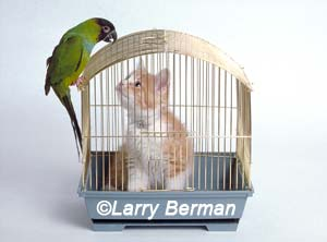 Cat in a bird cage by Larry Berman